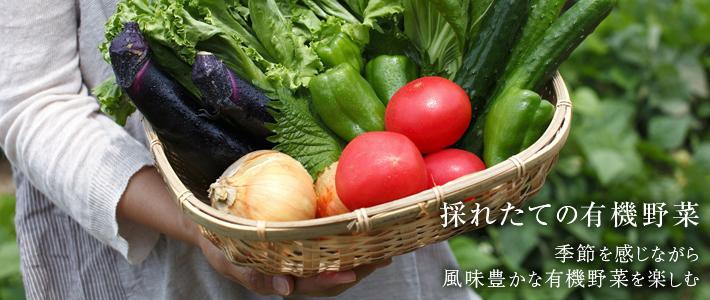 採れたての有機野菜 季節を感じながら風味豊かな有機野菜を楽しむ