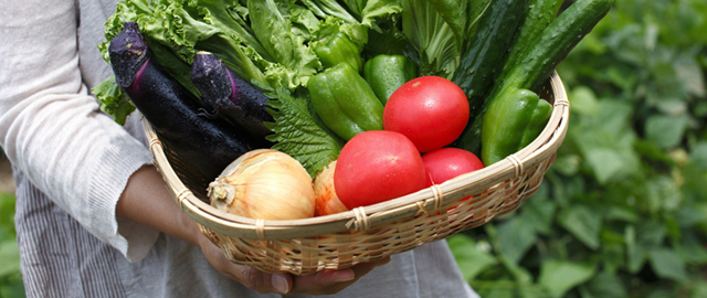 有機野菜メインイメージ
